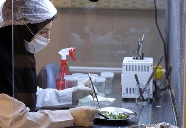 رونق زیست بوم نوآوری ایران با 1100 شرکت دانش بنیان حوزه سلامت